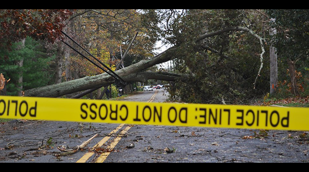 A tree felled by Hurricane Sandy in St. James, New York (credit Henry Powderly)