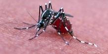 Malaria drove $500 million in healthcare costs, study says