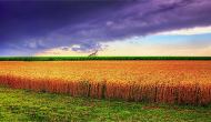 Kansas summer wheat photo by James Watkins via Wikimedia Commons