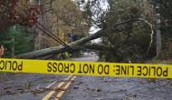 Tree felled by Hurricane Sandy