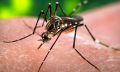 First Zika vaccine may start clinical trials in September; Congress yet to fund research