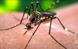 WHO declares end of Zika public health emergency