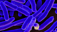 Most hospitals fall short in following best practices for antibiotics use, study finds